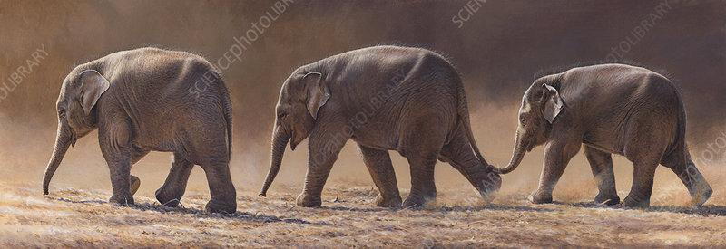 Asian elephants walking in a row, illustration