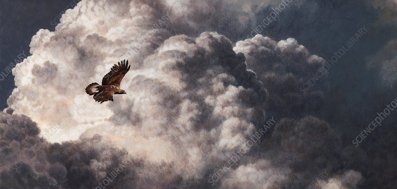 Golden eagle flying in stormy, cloudy sky, illustration