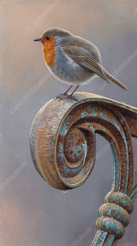 Robin redbreast perched on rusty armrest, illustration