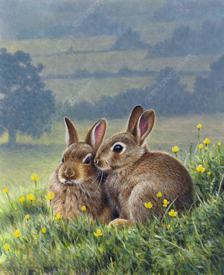 Two brown rabbits huddling together, illustration