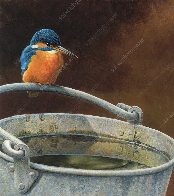Kingfisher perched on metal bucket, illustration