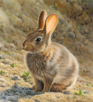 Brown rabbit sitting in sunshine, illustration