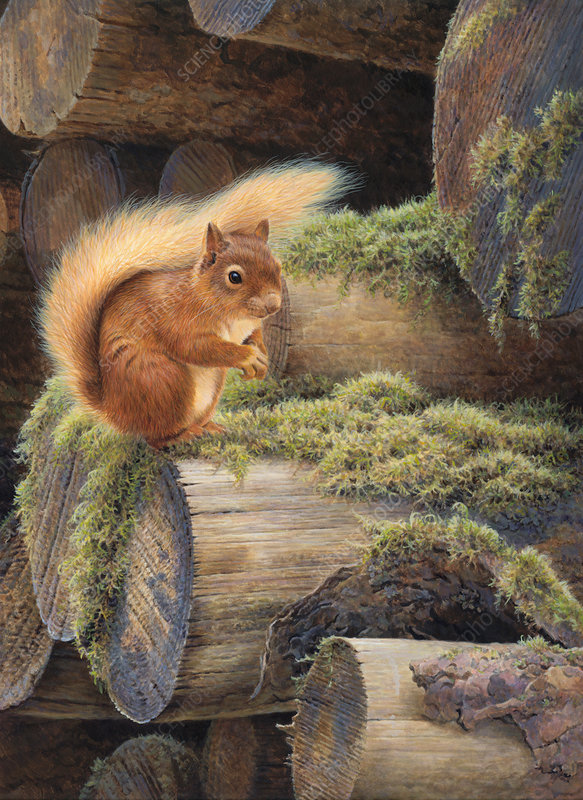 Red squirrel sitting on mossy pile of logs, illustration