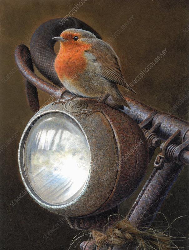 Robin redbreast sitting on handlebars of bike, illustration
