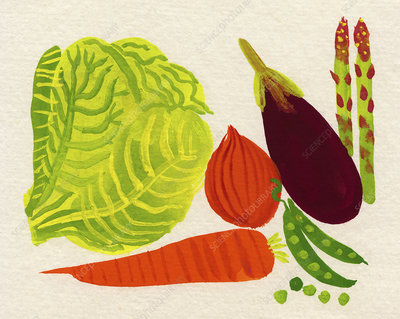 Various fresh vegetables, illustration