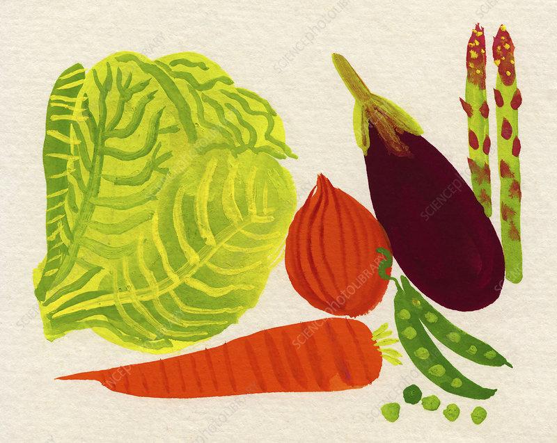 Various fresh vegetables, illustration
