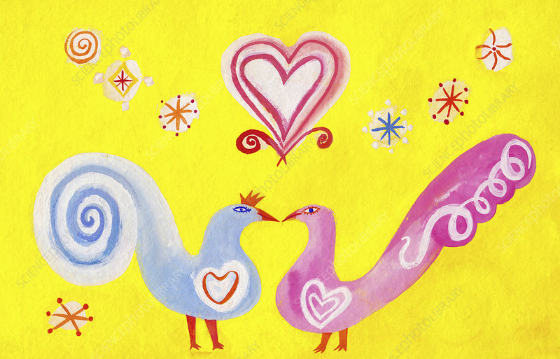 Two birds kissing and falling in love, illustration