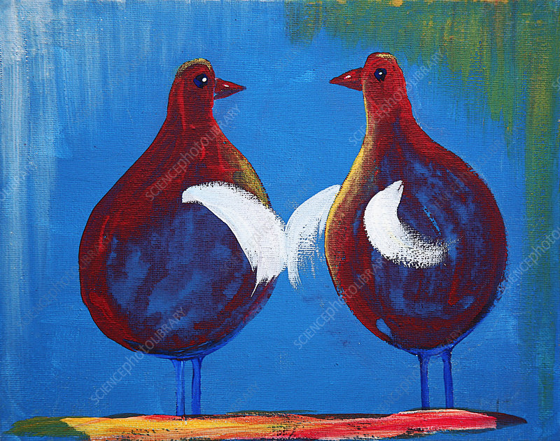 Two birds chatting together, illustration