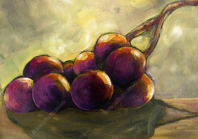 Still life of bunch of purple grapes, illustration