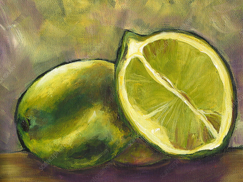 Still life of two limes, illustration