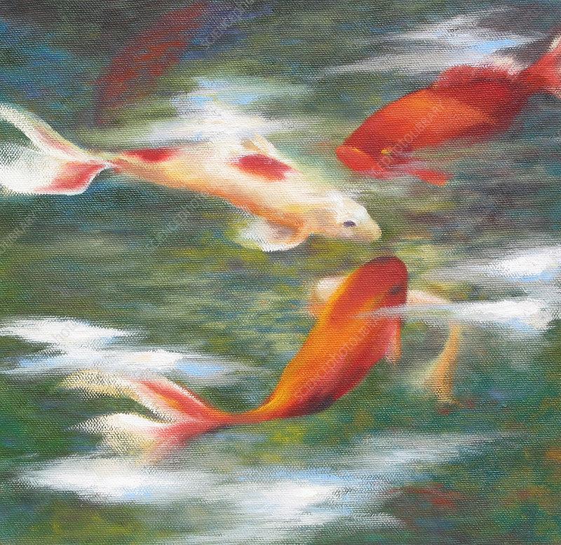Koi carp goldfish swimming in pond, illustration