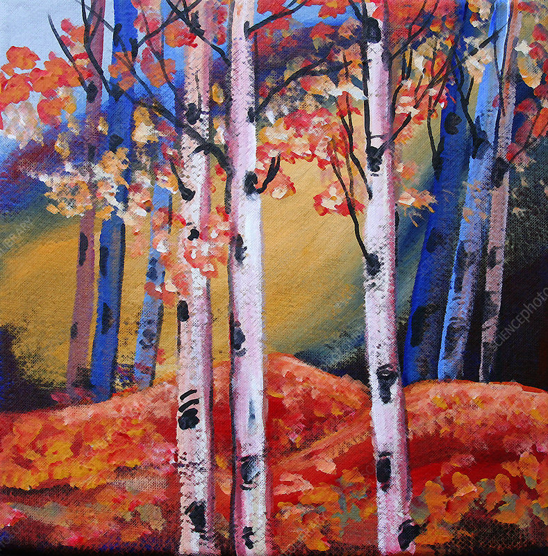 Bright colour autumn trees and leaves in woods, illustration