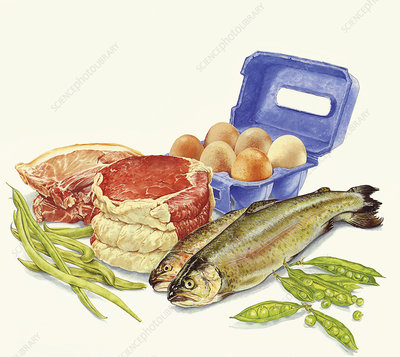 Food with protein, illustration