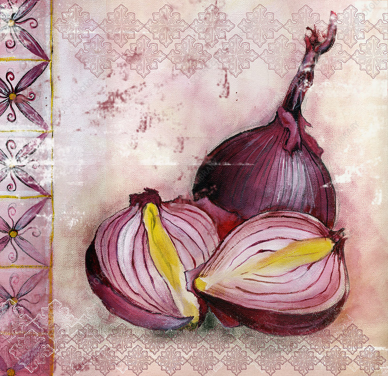 Red onions, illustration