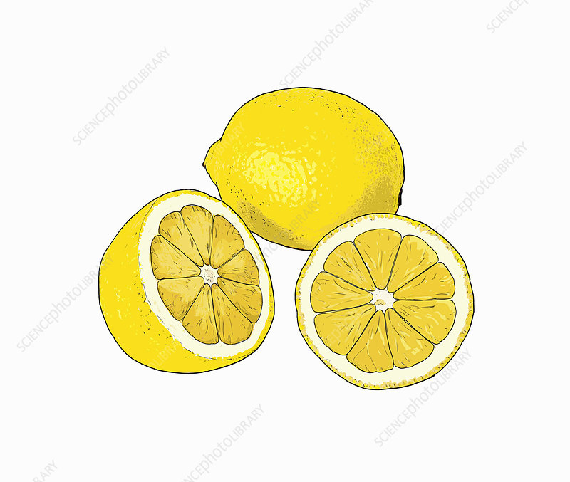 Lemons, illustration