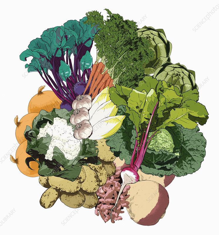 Fresh vegetables, illustration