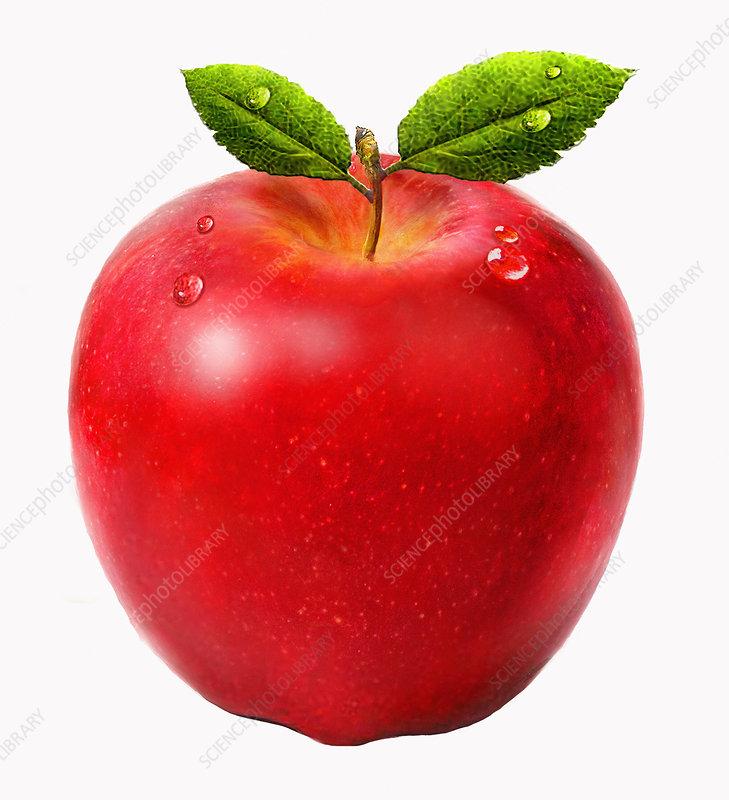 Fresh juicy red apple, illustration