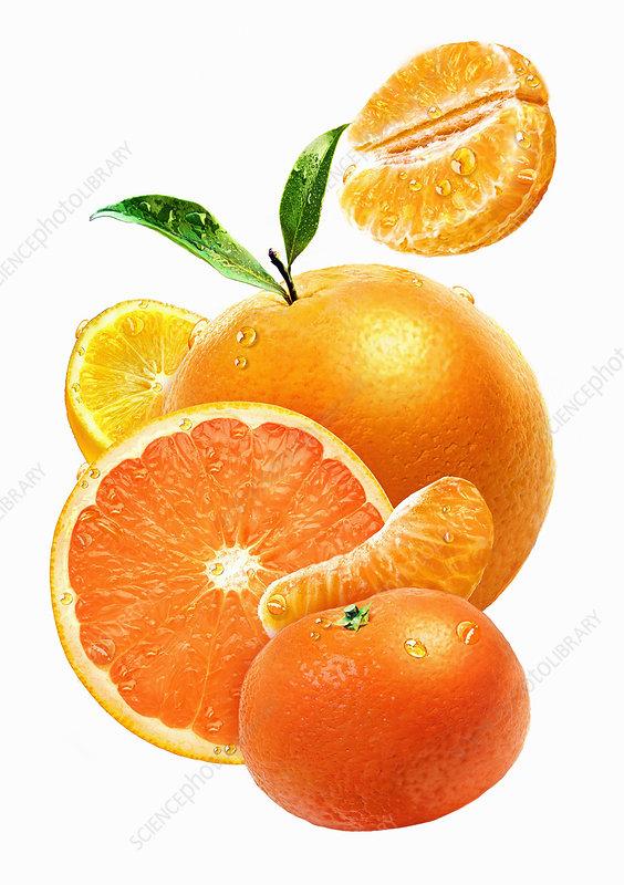 Fresh juicy oranges, illustration
