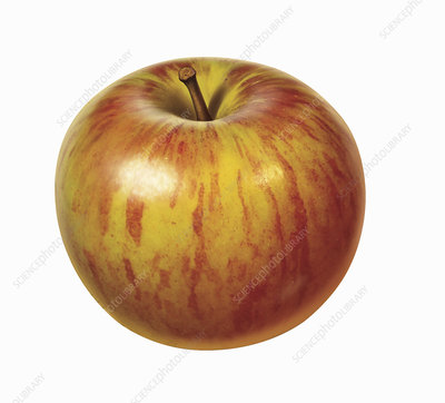 Fresh red apple on white background, illustration