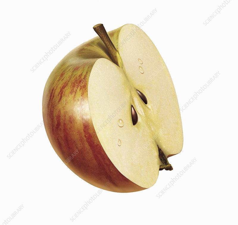 Half fresh red apple on white background, illustration