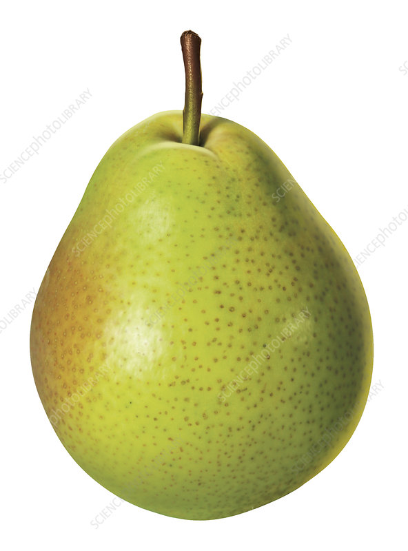 Fresh green pear on white background, illustration