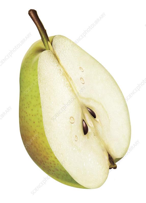 Fresh green pear half on white background, illustration