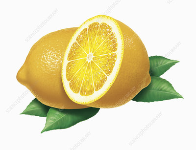 Fresh lemons, illustration
