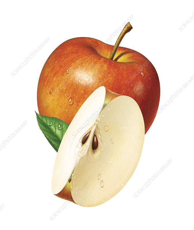Fresh sliced red apple, illustration