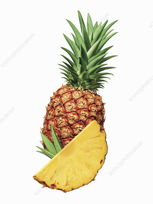Fresh sliced pineapple, illustration