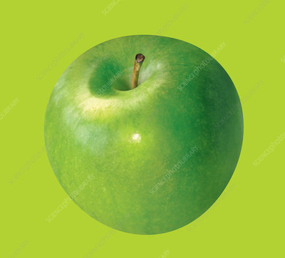 Green apple, illustration
