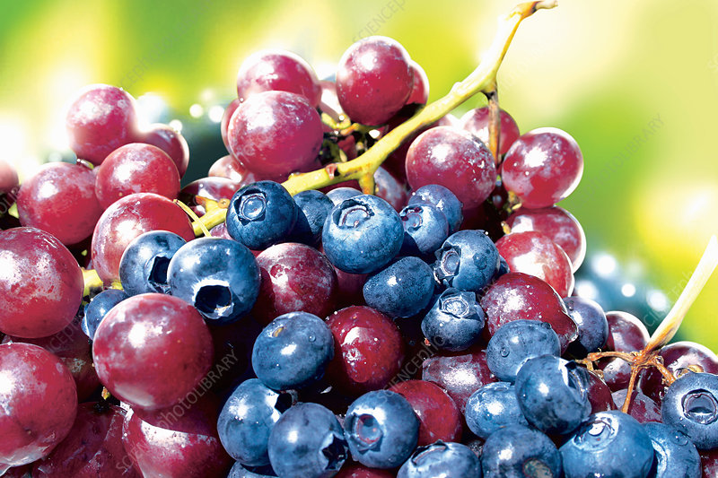 Blueberries and red grapes, illustration