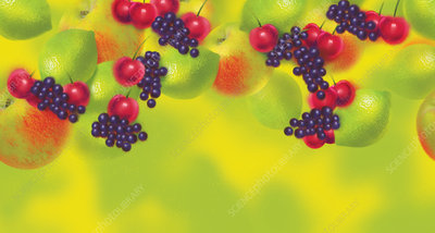 Fresh fruit, illustration