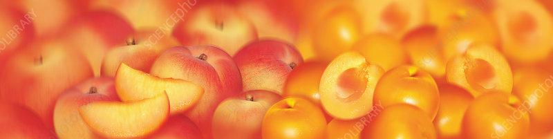 Slices of fruit, illustration