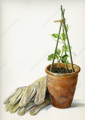 Gloves and seedling in plant pot, illustration