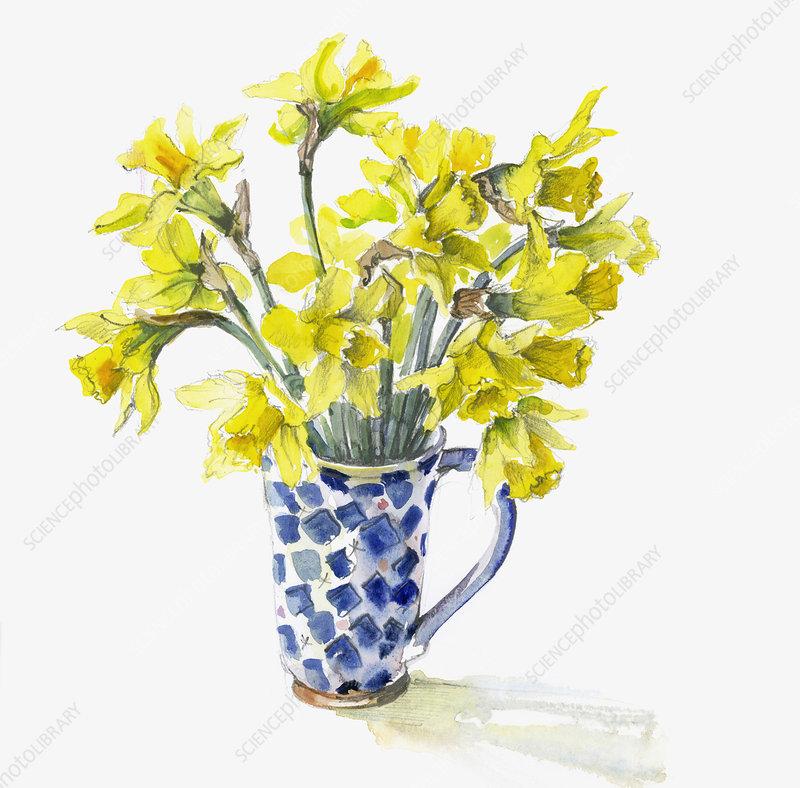 Bunch of daffodils in mug, illustration