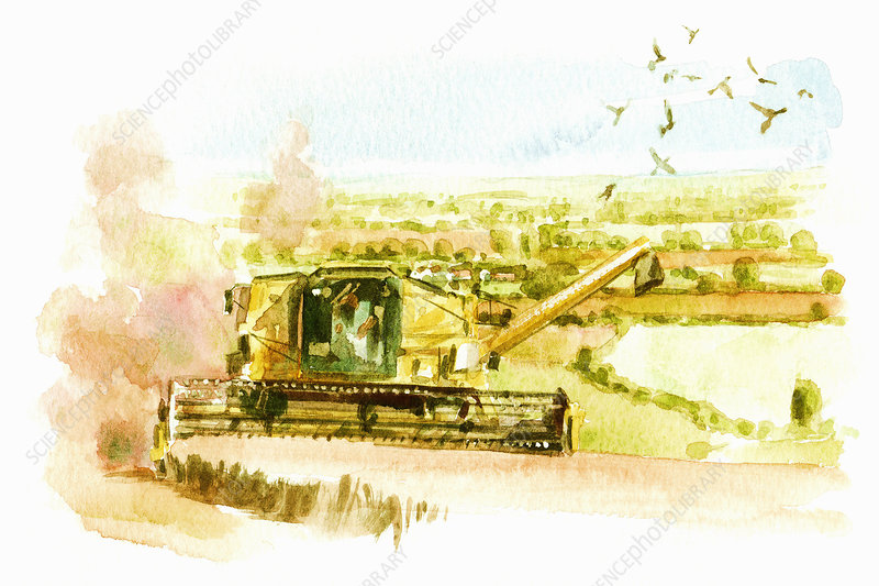 Combine harvester, illustration