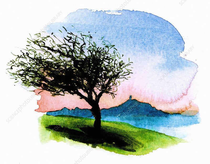 Glastonbury Thorn, England, illustration