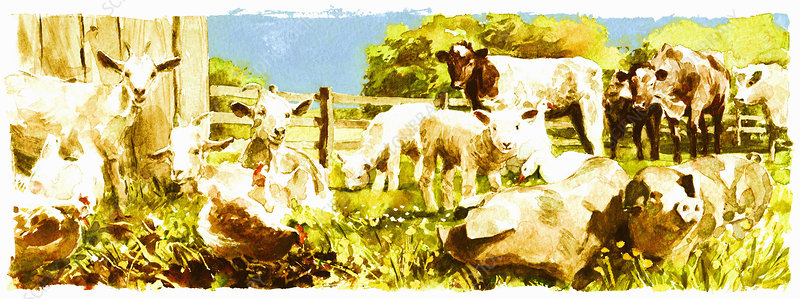 Farmyard animals in field together, illustration