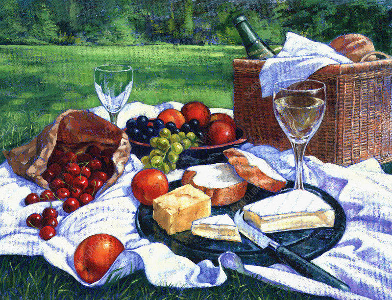 Food and wine on picnic blanket, illustration
