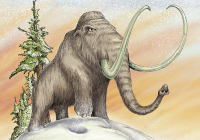 Mammoth with large tusks standing in snow, illustration