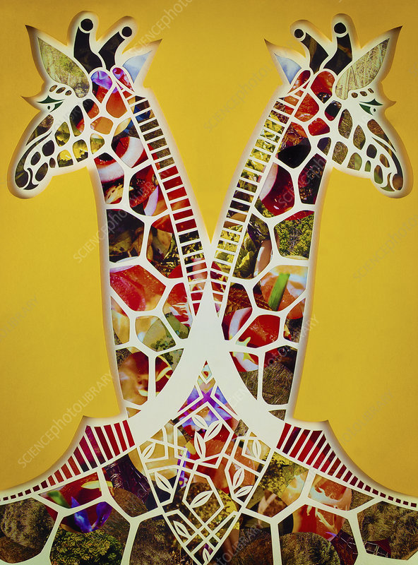 Paper collage of two symmetrical giraffes, illustration