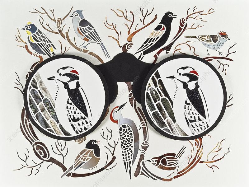 Binoculars and bird watching, illustration