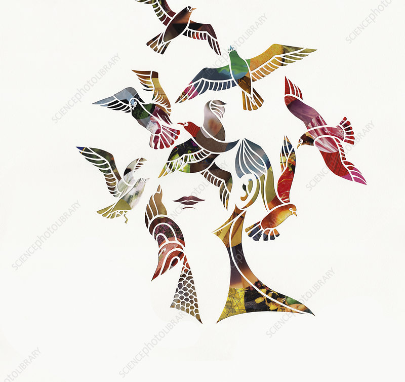 Birds flying around woman's head, illustration