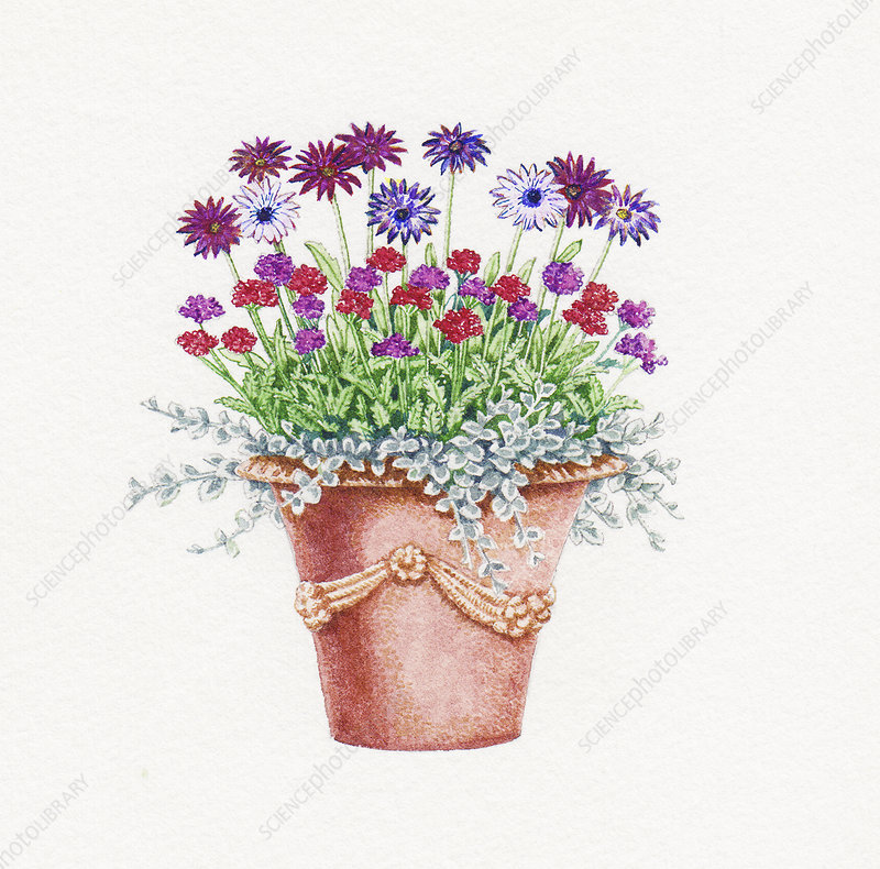 Ornate plant pot, illustration