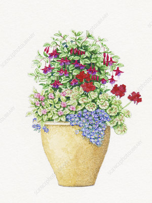 Plant pot with flowers, illustration
