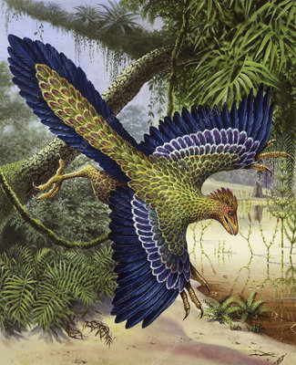 Archaeopteryx dinosaur flying, illustration
