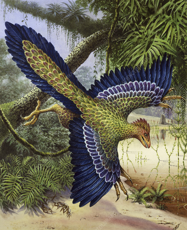 Archaeopteryx dinosaur flying, illustration