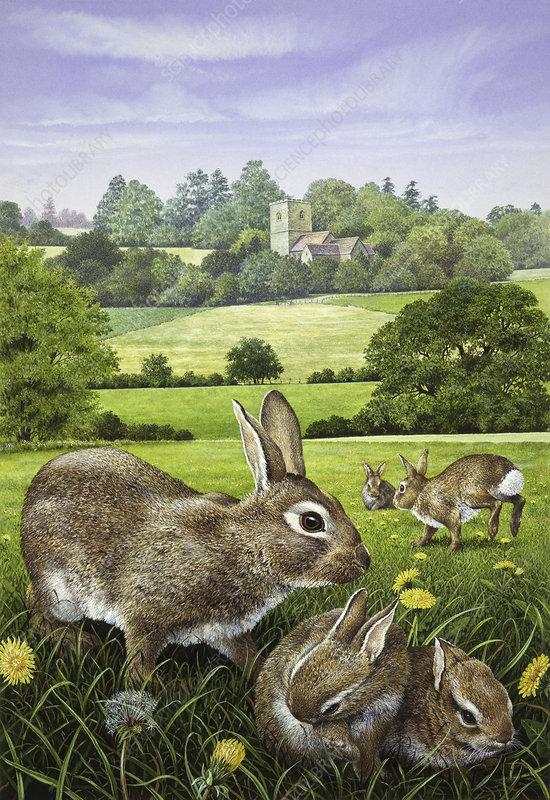 Wild rabbits in dandelion field in countryside, illustration