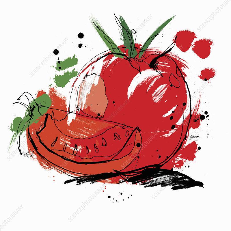 Whole and sliced tomato, illustration