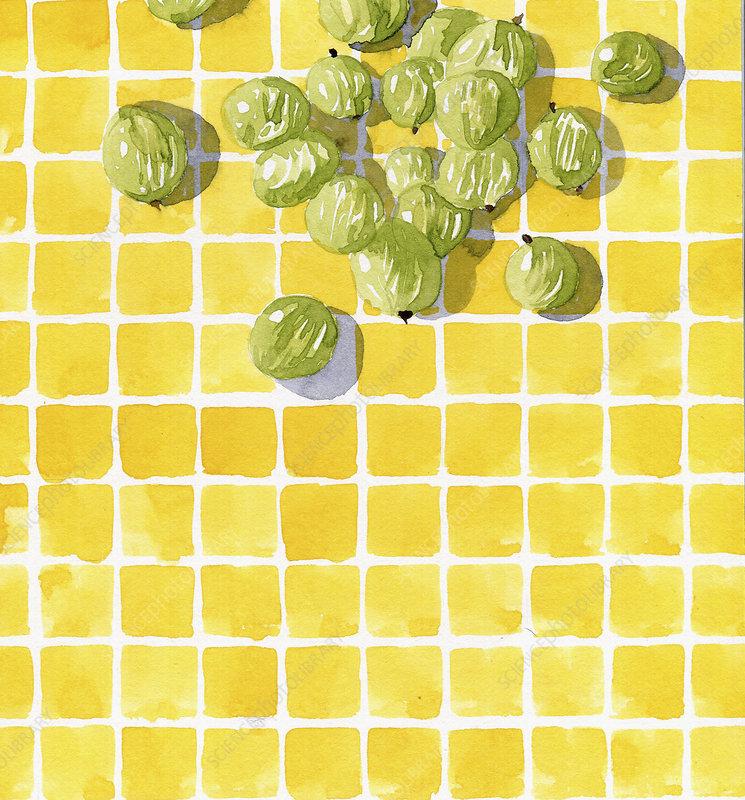 Fresh gooseberries, illustration